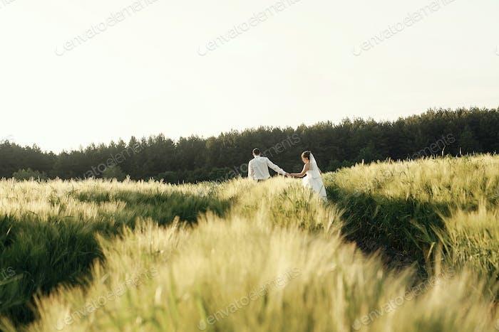 gorgeous wedding couple walking in wheat field