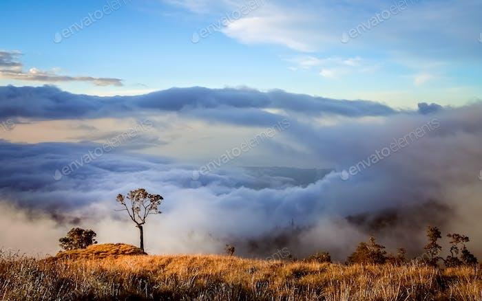 View From Gunung Rinjani