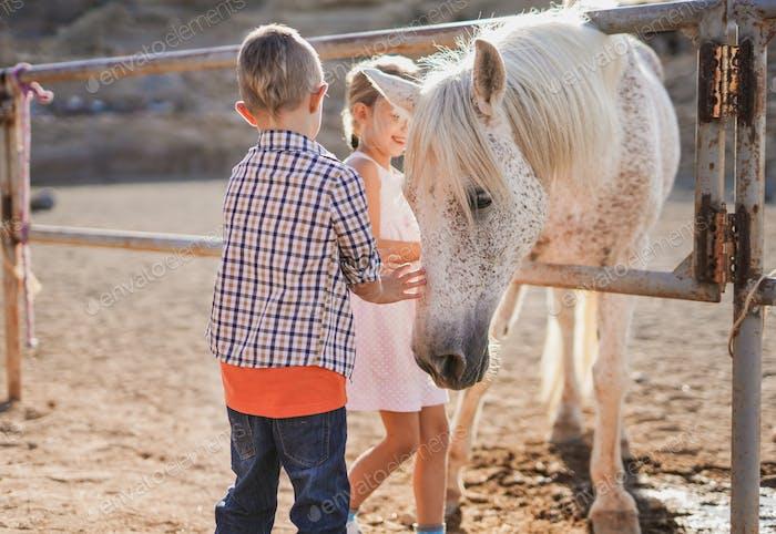Niños felices cuidando a un caballo con caricias - Los niños y el amor animal