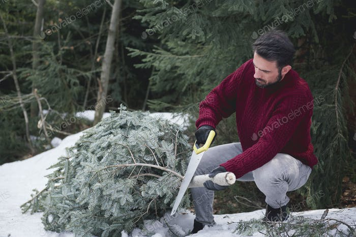Man cutting the Christmas tree