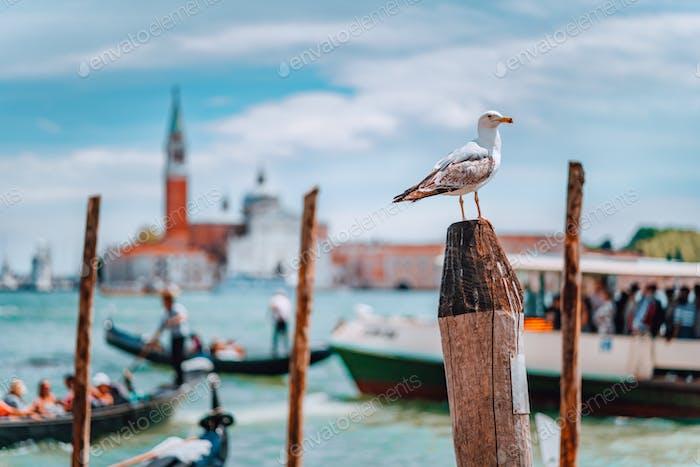 Venedig, Italien. Möwe auf der Stange gegen verschwommenes Panorama Blick auf Chiesa di San Giorgio Maggiore oder
