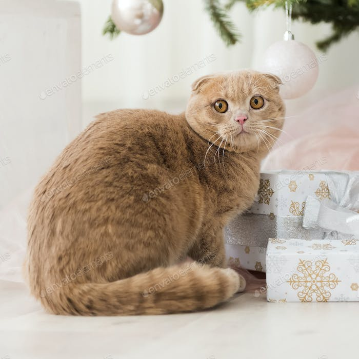 Cat with christmas tree and gift