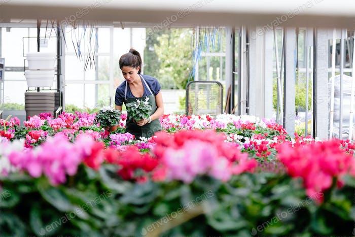 Menschen, die in Flower Shop arbeiten