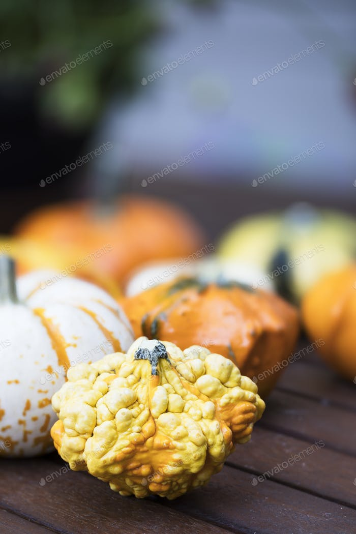 Knobby Autumn Gourd