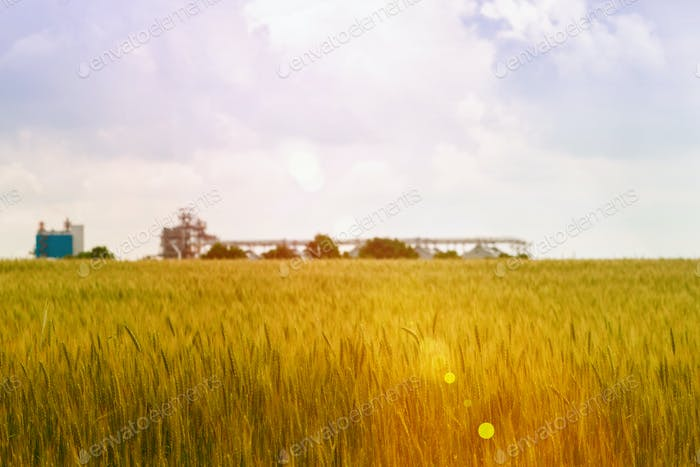 Wheat fields and elevator