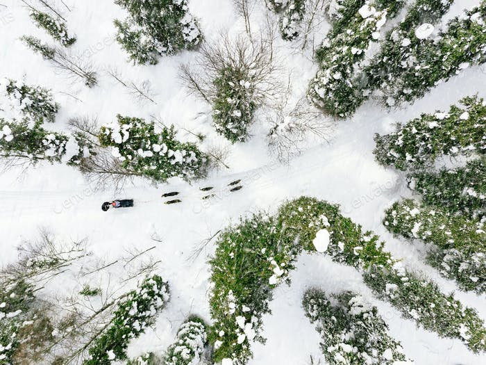 Aerial view of sledding with husky dogs in Lapland Finland.