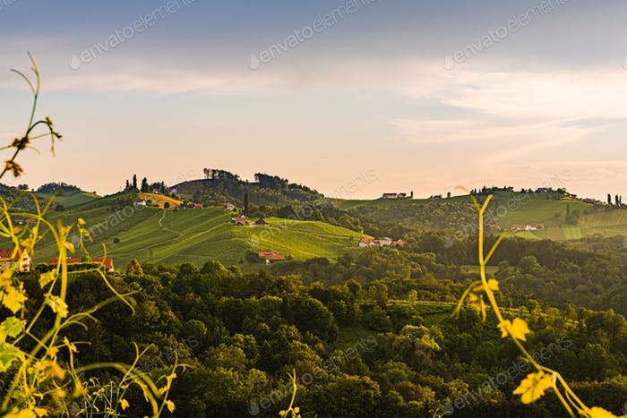 Vineyards in Austria south Styria, wine country,