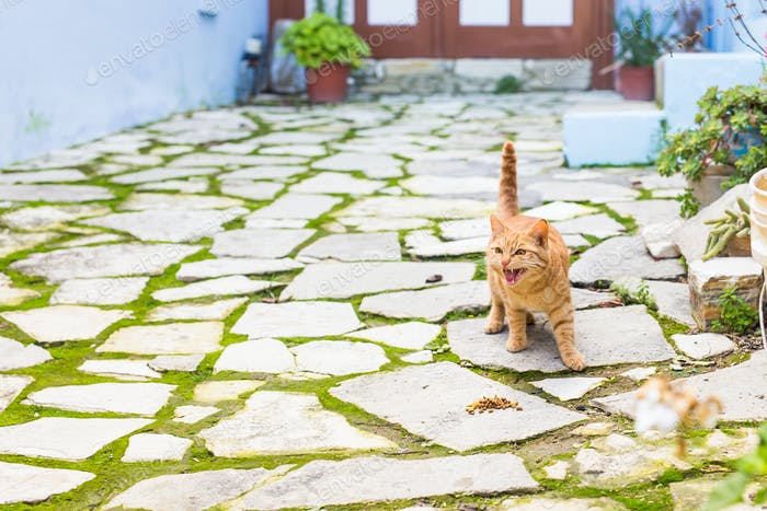 adorable meowing red kitten outdoors