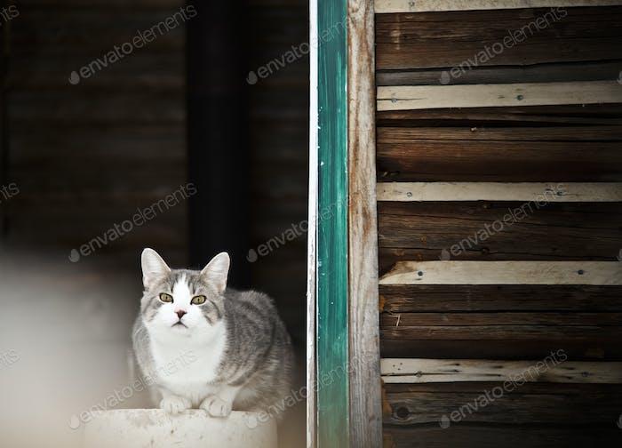 Cat Bewachung des Landhauses!