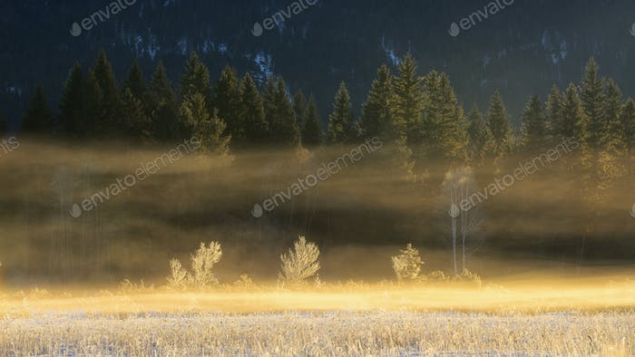 Detail of forest trees. Frozen bavarian scene during winter time. Beautiful Barmsee lake, Germany.