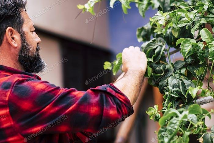 Крупным планом борода человек без перчаток резки листьев в его саду.