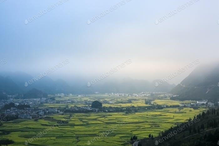yunnan landscape of rapeseed flowers field