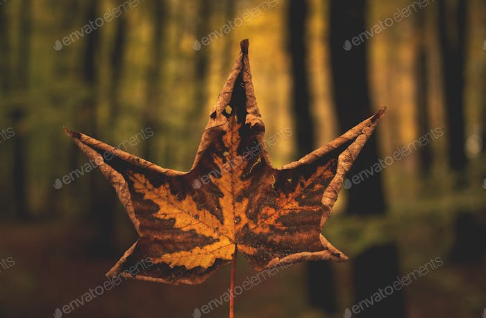 Autumn leaf in the forest