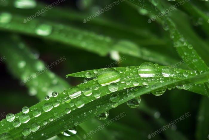 Macro of raindrop