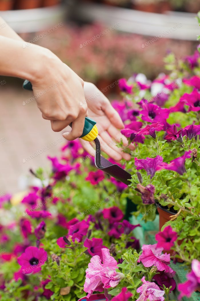 Gardener spading flowers in the pot
