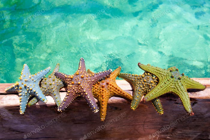 Starfishes on wooden boat