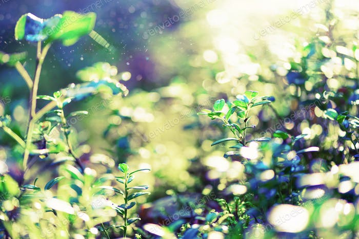 Blur green leaves with bokeh, abstract background. Banner. Wild nature