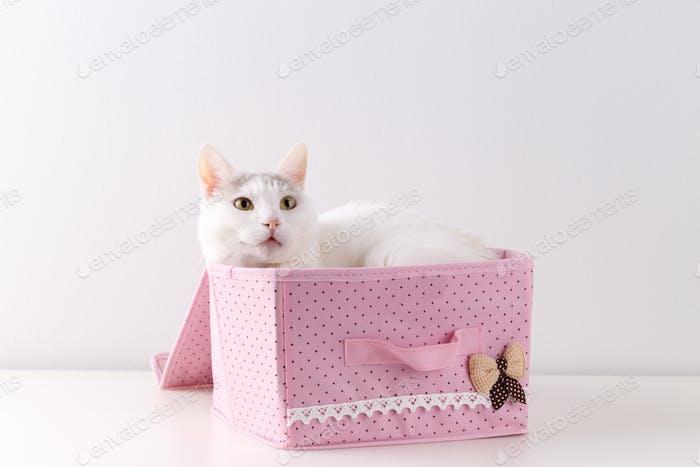 Gato doméstico blanco en una pequeña caja