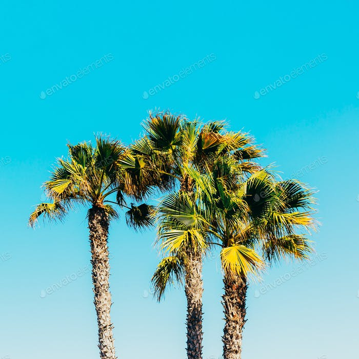 Palms. Canary Islands. Minimal