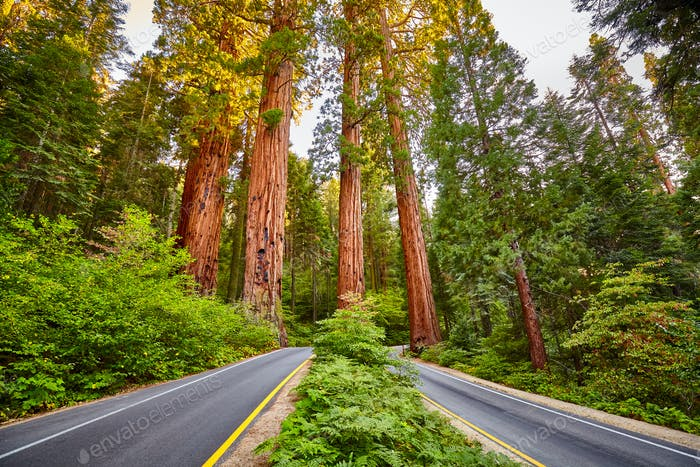 Scenic road in Sequoia National Park, California, USA.