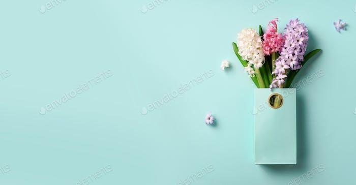 Frühlings-Hyazinthe Blumen in Einkaufstasche auf blauem, prägnantem Pastell-Hintergrund. Banner mit Kopie