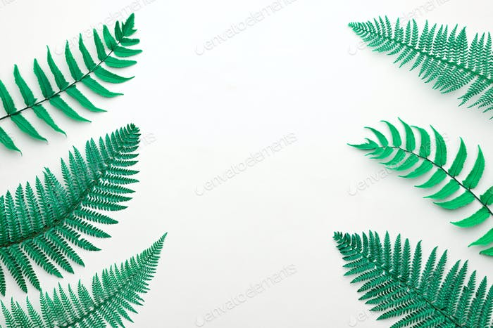 Fern Tropical