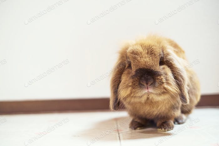 Cute small easter bunny with white background