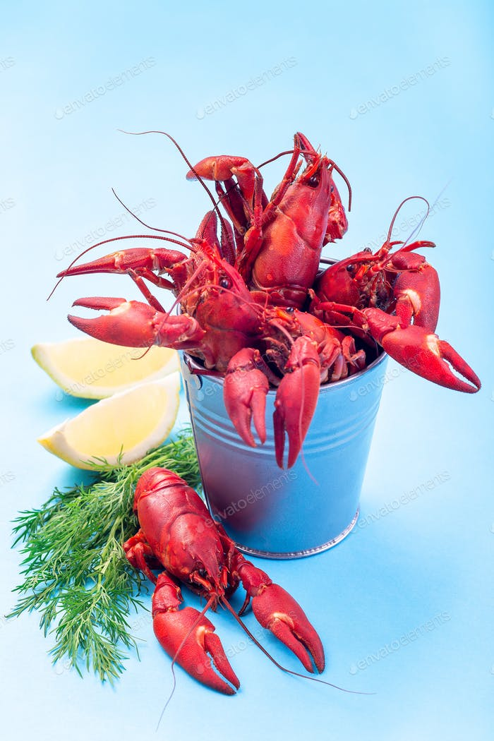 Crayfishes in iron bucket and on blue background served with dill and lemon, vertical