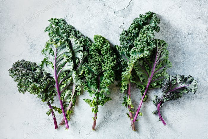 Freshly cut purple Kale leaves on a light textured background