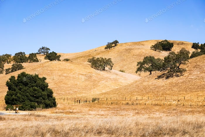 Dry grass covering rolling hills