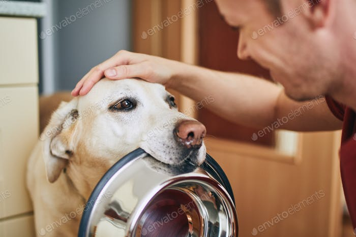 Domestic life with pet