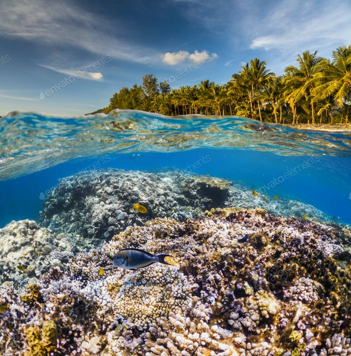 Unterwasserszene mit Riff und tropische Fische