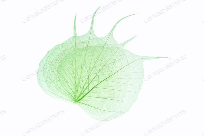 bodhi leaf vein