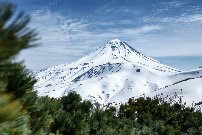 Snowy Cone of Volcano and Thickets of Evergreen Pinus Pumila Bushes