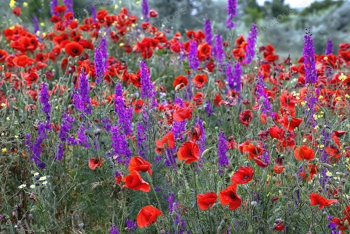 rural flowers