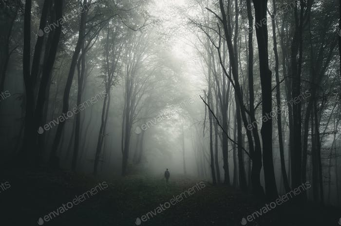 Man silhouette in haunted forest
