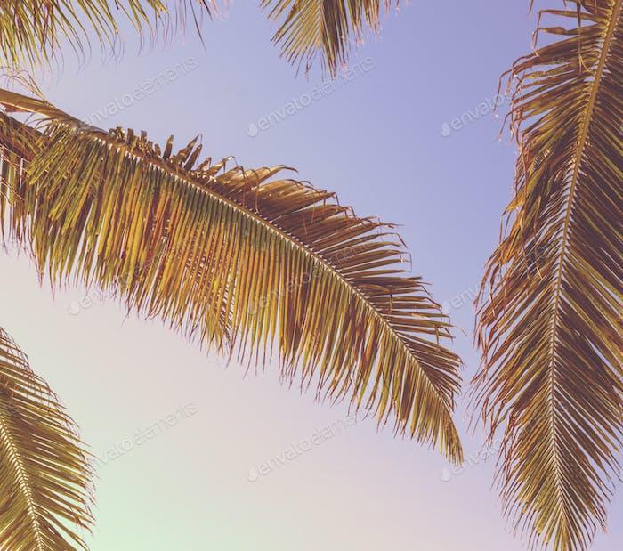 Retro Tropical Palm Tree