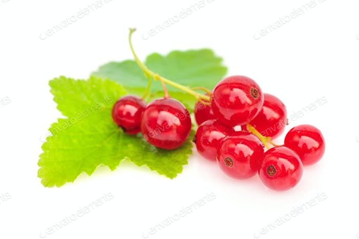 Red currants and green leaves on white background