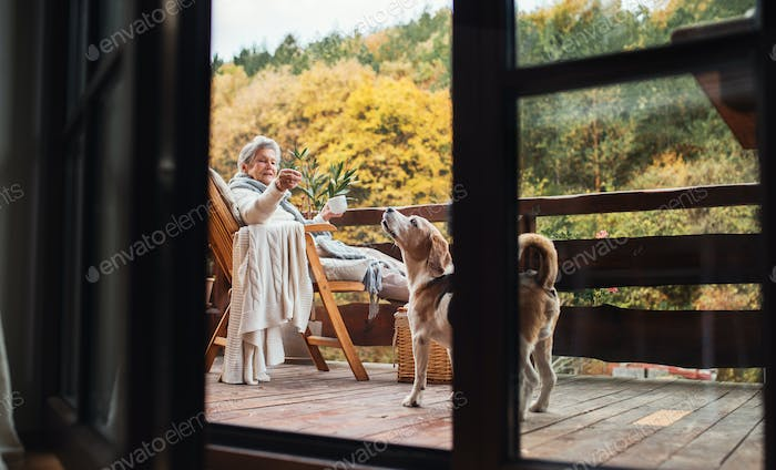 An elderly woman with a dog sitting outdoors on a terrace on a sunny day in autumn.