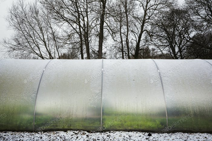 Exterior view of a poly tunnel in winter at Le Manoir aux Quat'Saisons, Oxfordshire.