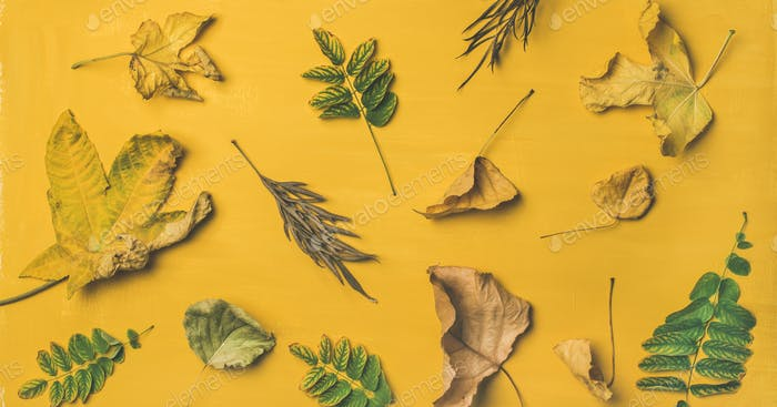 Flat-lay of dried yellow and green fallen tree leaves