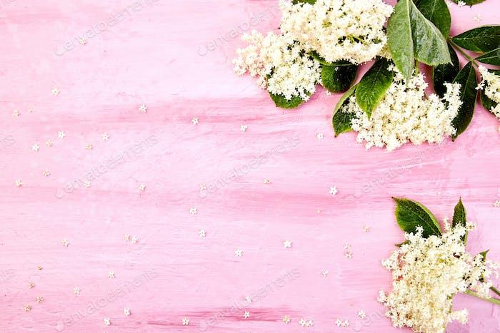 Flower of elder on pink background