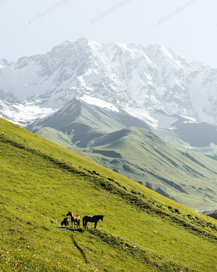 Horses on green valley against main Caucasian ridge