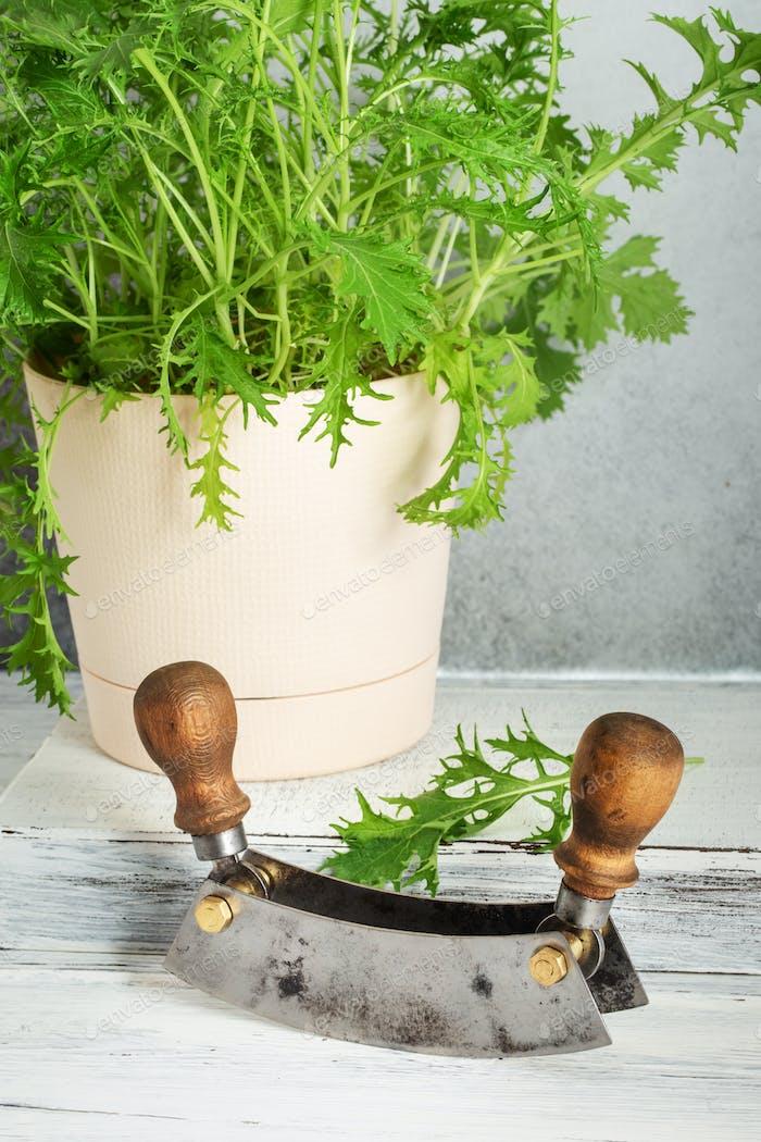 Mezzaluna and mizuna plant