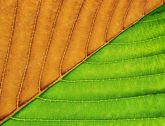 Macro of green leaf.