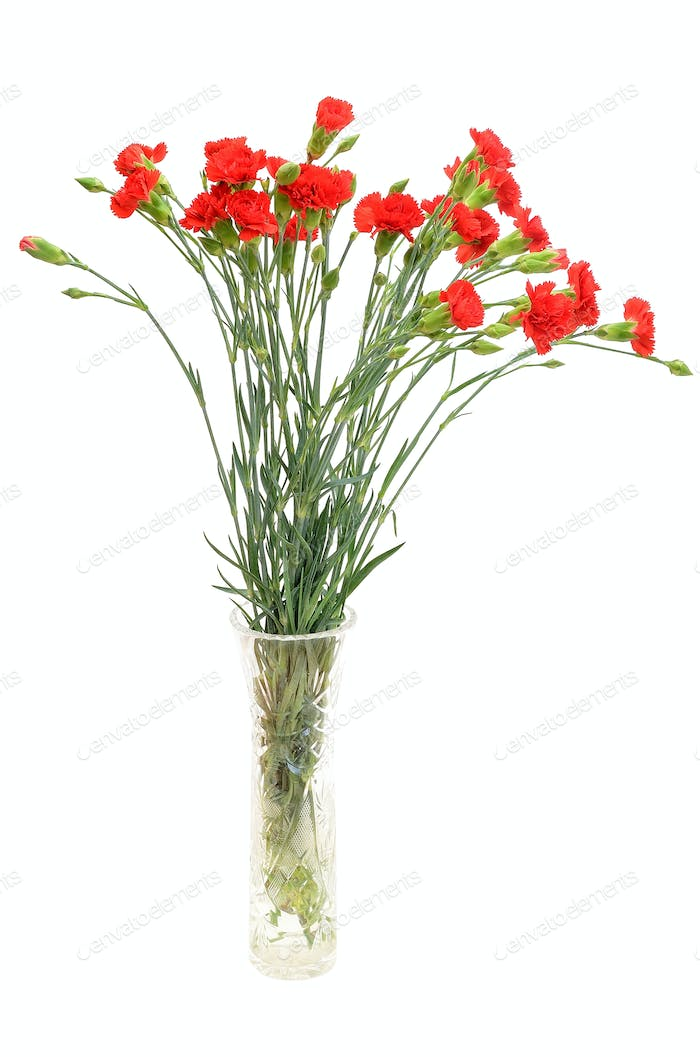Red carnation flowers in the glass vase