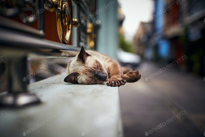 Cat sleeping in the street