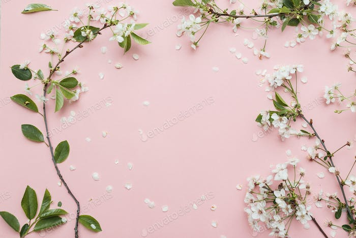 Group of cherry branches with blossom isolated on pink