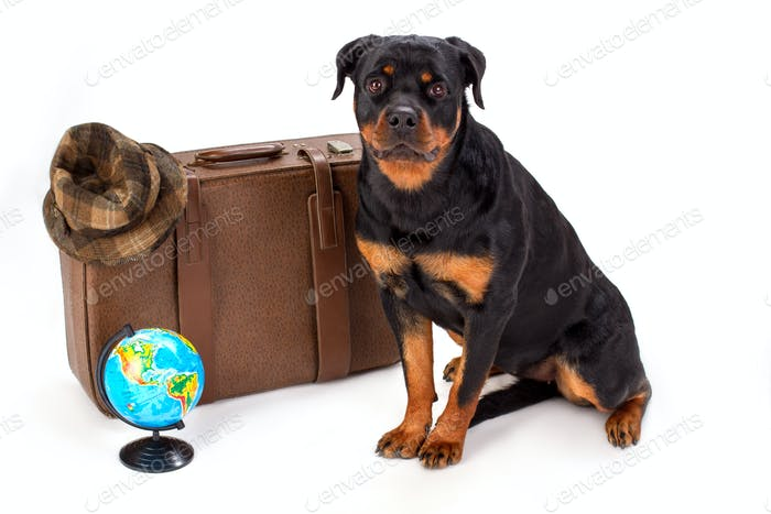 Hat on suitcase, globe and rottweiler dog