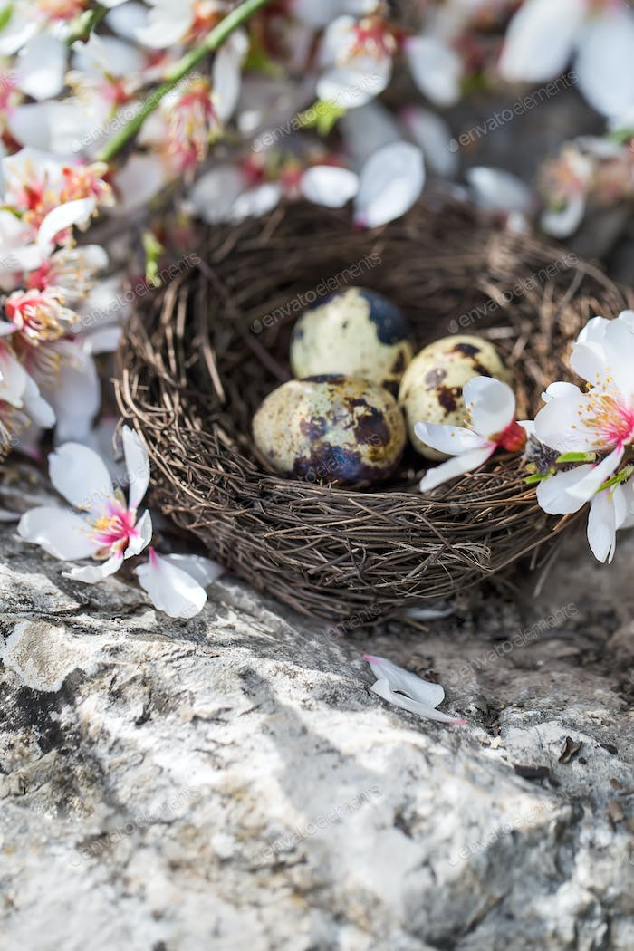 Quail eggs and blossom